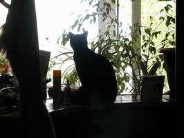 Bilder - Best of 2001 - bonny-silhouette