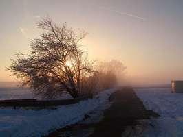 Bilder - Best of 2002 - baum-nebel-schnee