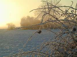 Bilder - Best of 2002 - gebuesch-nebel-schnee