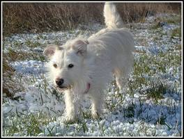 Bilder - Best of 2004 - barking-snow-rabbit