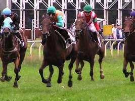 Bilder - Best of 2004 - pferderennen-hassloch