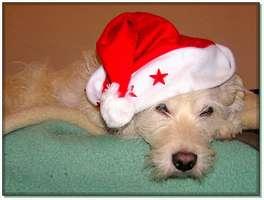 Bilder - Best of 2004 - tarzan-weihnachten-muetze