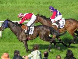 Bilder - Best of 2005 - pferderennen-im-mai-2