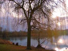 Bilder - Best of 2007 - baum-am-see