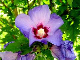 Bilder - Best of 2007 - flower-blue