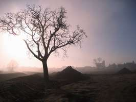 Bilder - Best of 2008 - baum-nebel