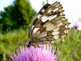 Bilder - Best of 2009 - butterfly