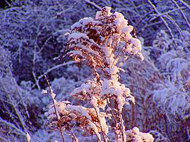 Bilder - Best of 2009 - schnee-rot-blau