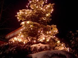 Bilder - Best of 2009 - weihnachtsbaum