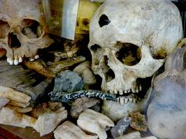 Bilder - Best of 2010 - skulls-and-bones