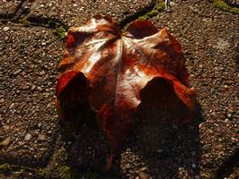 Bilder - Best of 2011 - fall-leave