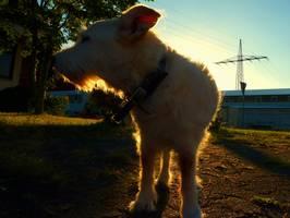 Bilder - Best of 2012 - tarzan-gegenlicht