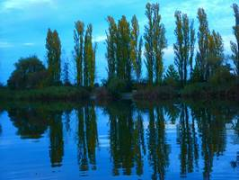 Bilder - Best of 2013 - mirror-trees