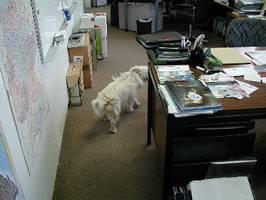 It's a dogs life - Tarzan - Hard Business