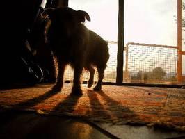It's a dogs life - Tarzan - Hotel Ödnis 4