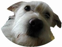 News - It's a dog's life: Berichte aus Tarzans Hundeleben